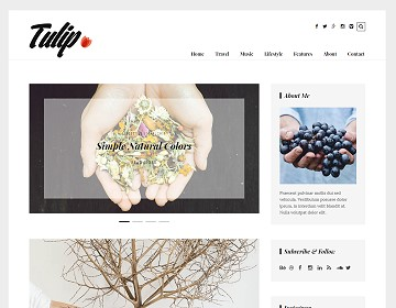 Top Wordpress Responsive Themes